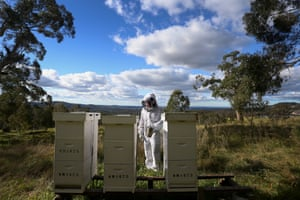 Apiarist Darryn McKay of Bowral Bees inspects hives in Bowral. Darryn is a 'farm to gate' beekeeper with a number of hives hosted in the Southern Highland region, he also offers bee swarm collection and training workshops in the Spring.