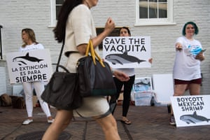 A save the vaquita rally outside the Mexican Embassy in Washington, DC