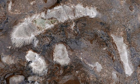 Living fossils: the plants holding the key to ancient and modern