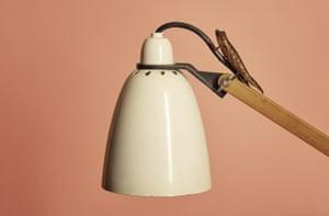 A pygmy chameleon on a lamp.