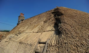 Layers of reed on the roof of a house in Frampton, Dorset.
