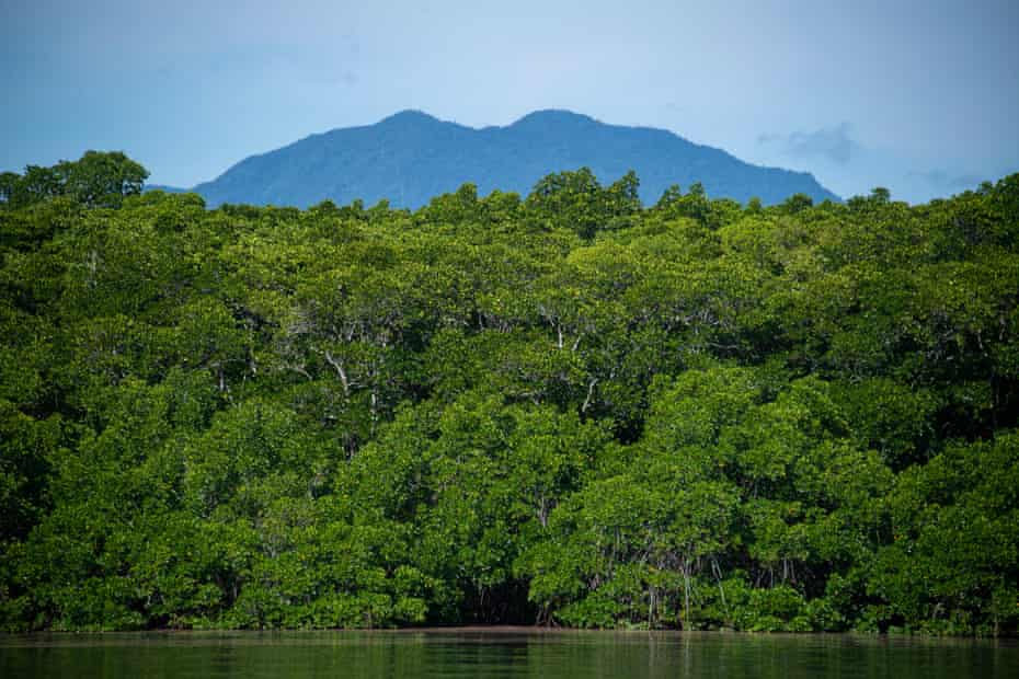 The mangrove forests on Admiralty Island at Trinity Inlet, Queensland