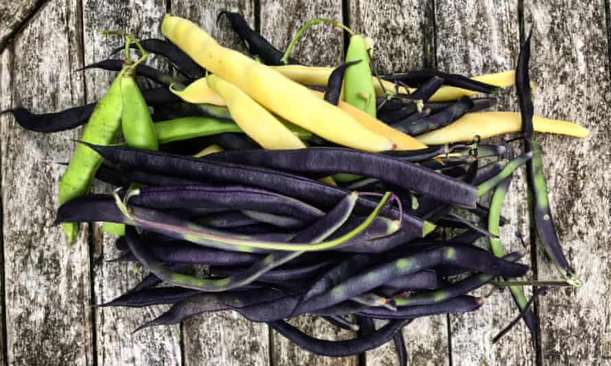 Late harvest: 'strings of beans will be a good supper.'