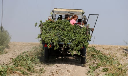 Hop harvest in the village of Rocov, Czech Republic.