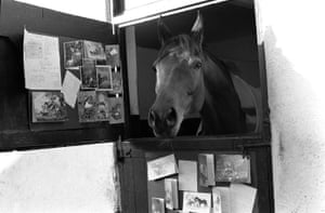 Legendary racehorse Red Rum in his stable surrounded by some of the many Christmas cards sent by well-wishers in 1974
