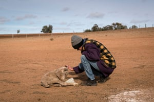 Tanya Jerry cares for a sheep to weak to eat.