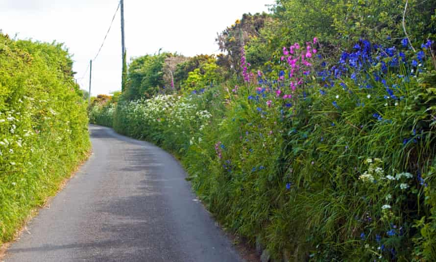 Every year sees the loss of 10,000 miles of hedges in the UK.