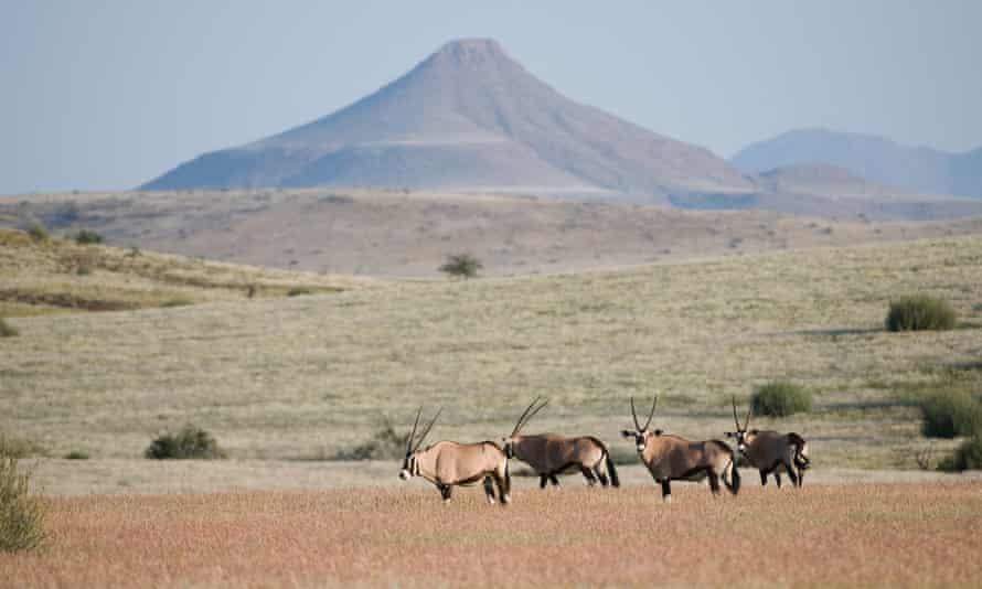 Gemsbok on the plains of Damaraland.