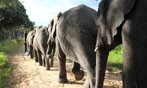 Rescued elephants at the Wild is Life sanctuary