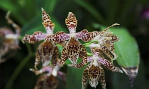 Orchids at the Jardin Botanico in Quito.