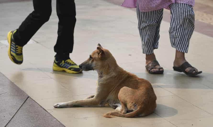 People walking past a street dog in New Delhi.