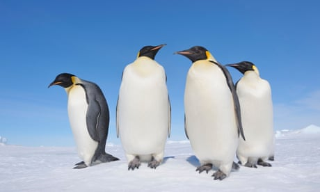 world s longest penguin dive of more than half an hour is recorded