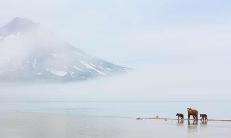 Family matters … a bear and and cubs next to Kurile Lake, Russia.