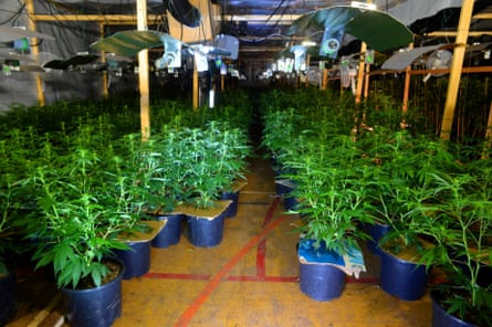Cannabis plants found inside the leisure centre.