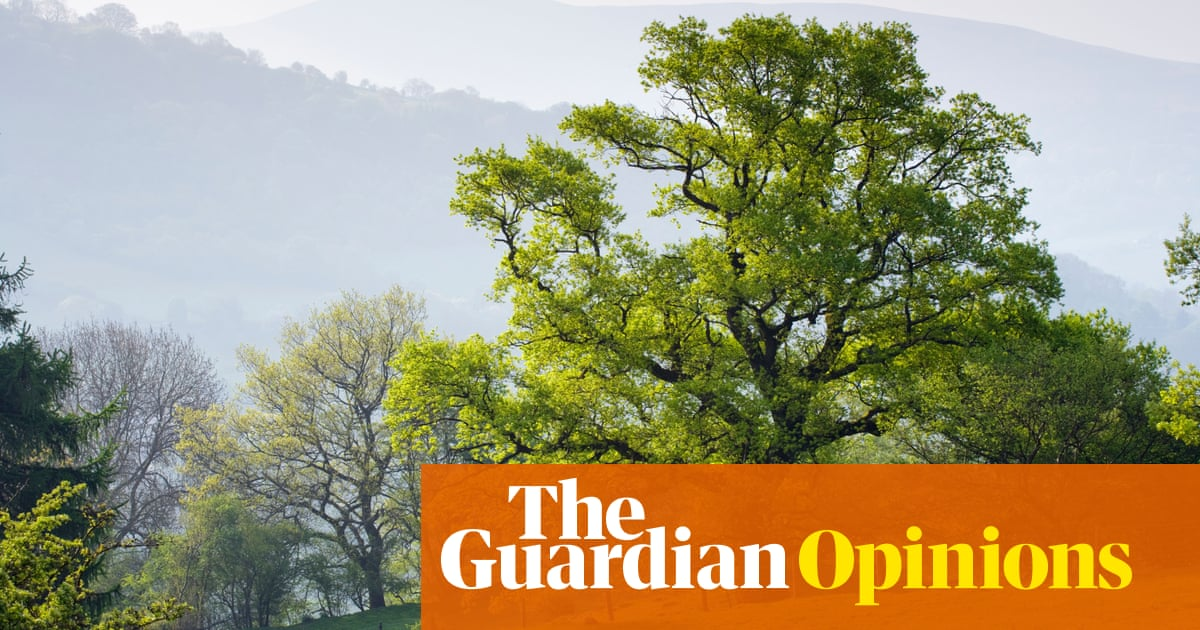 The Guardian view on saving forests: when trees are at risk, so are we