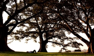 Forty winks under fig trees at Sydney's Observatory Hill. Photograph: David Gray/Reuters
