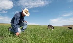 Rancher Dan Probert inspecting grass conditions on the Zumwalt Prairie in Northeast Oregon.