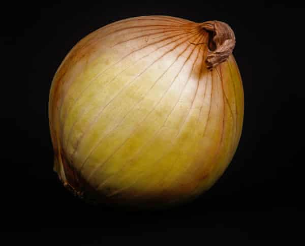 An onion. Unlike shallots, an onion grows as a single bulb.