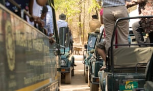 A four-month-old tiger cub crosses the road in front of safari vehicles in Bandhavgarh national park, Madhya Pradesh, India. Wildlife photographer Amit Kilam spent a few days following a family of tigers in the park.