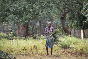Laksmi Shankar Porte collects grass from the Hasdeo Arand forest for making ropes, brooms and mats.
