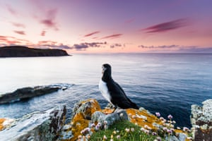 A puffin appears to contemplate a beautiful view of the horizon
