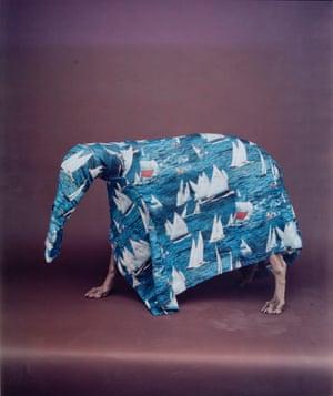 Caribbean Ant Eater, 1988