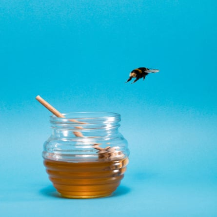Bee and pot of honey