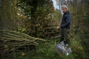 Coppicing trees exposes them to extra sunlight which means they grow up to 30% faster, Wolfe estimates.