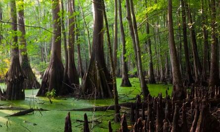 The Great Dismal Swamp, North Carolina.