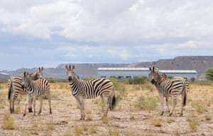 A group of zebras in Jwana Game Park, Botswana