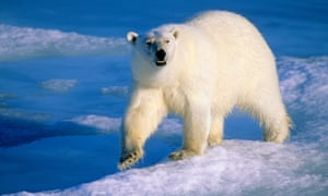 The last polar bear mauling in the region is believed to have happened 18 years ago in Rankin Inlet, about 200km north of Arviat, the hamlet near the attack.