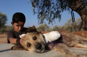 A boy stands next to a dog whose leg was amputated by a vet after it was hit by shrapnel during a bombardment in Idlib, Syria.
