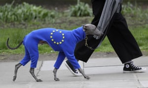 Dog in an EU cape