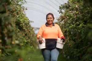 Manuela Dos Santos working on the Hillwood Berries site in Tasmania