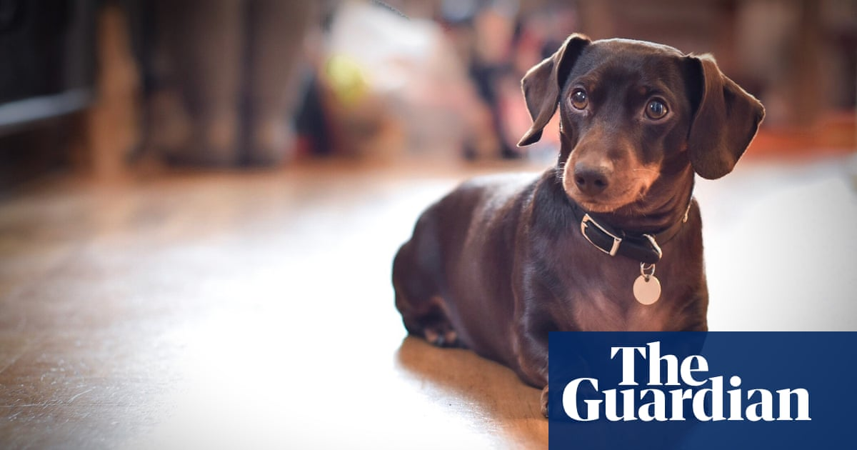 1d23b89496d What makes a dachshund the perfect muse? The long history of sausage dogs  in art