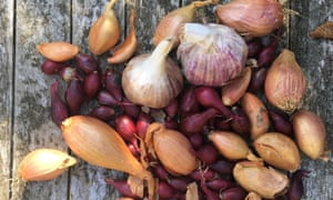 Know your onions: plant garlic and onions now and enjoy their green shoots.