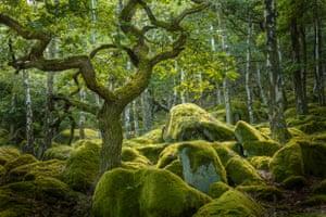 Emerald greens of an enchanted woodland, Peak District, Derbyshire
