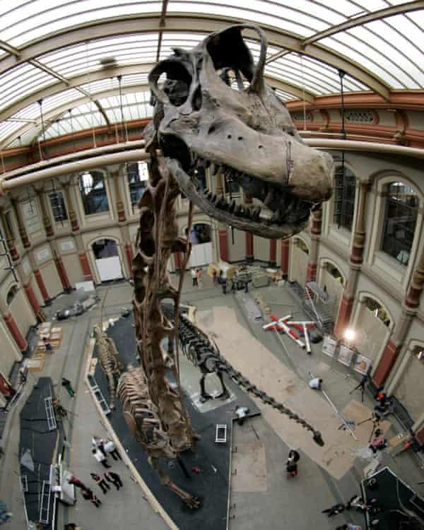 The Brachiosaurus brancai skeleton at the Museum fur Naturkunde in Berlin.