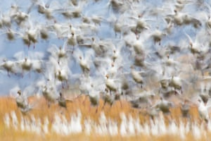 2020 GDT nature photographer of the year: birds category winner: Takeoff by Flurin Leugger