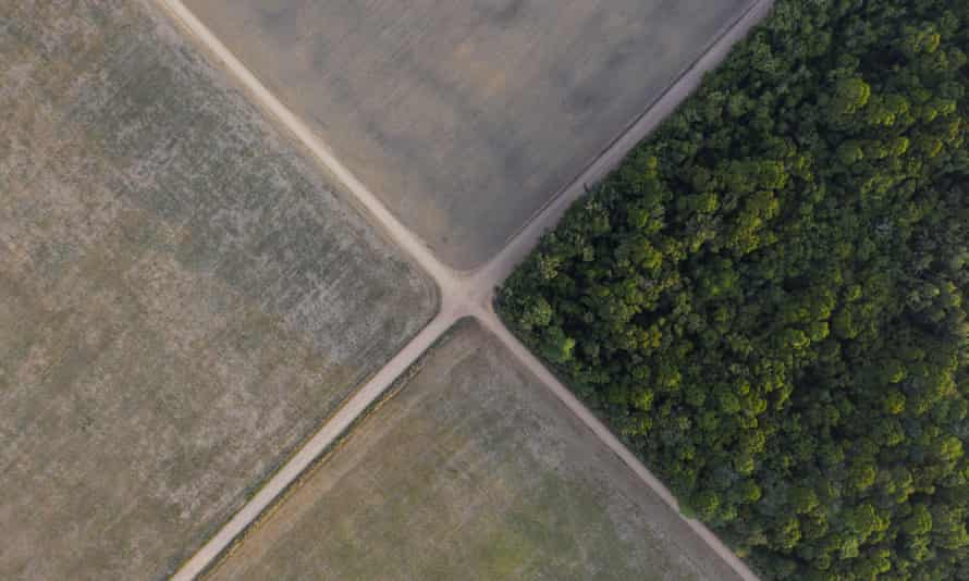 A section of the Amazon rainforest stands next to soy fields in Belterra, Para state, Brazil.