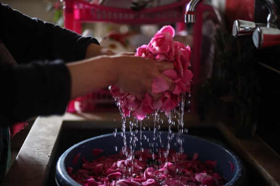 Nahla al-Zarda washes rose petals, used to make rose drink.
