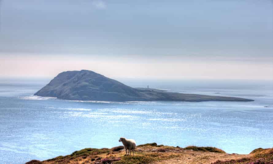 Solitary sheep on Welsh coastal headland overlooking Bardsey Island