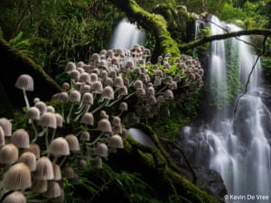 The winner of the botanical category, Enchanted Forest by Kevin De Vree. De Vree says: 'Lamington national park is a fairytale forest teeming with waterfalls, gigantic old trees and wildlife. Taking in all this magical beauty, I wondered when the ancient trees would start talking and if the fairies would appear. To me, this fungi stairway captures the magic of this century-old, semi-tropical forest.'