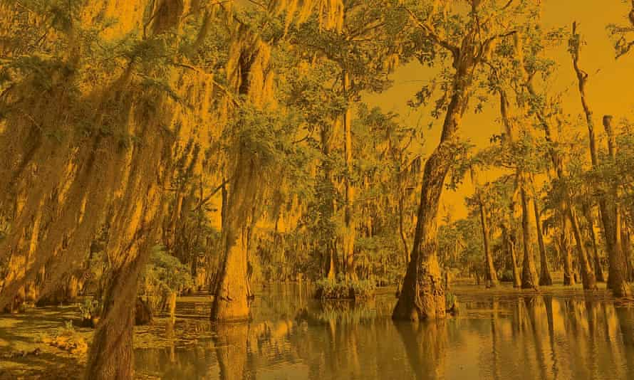 A bayou in Louisiana.