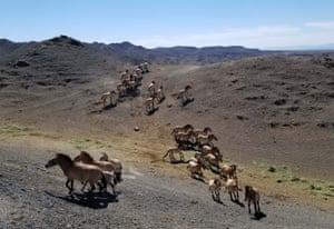 Wild horses at a wild animal park on southern foot of Tianshan Mountain in China's north-west Xinjiang region