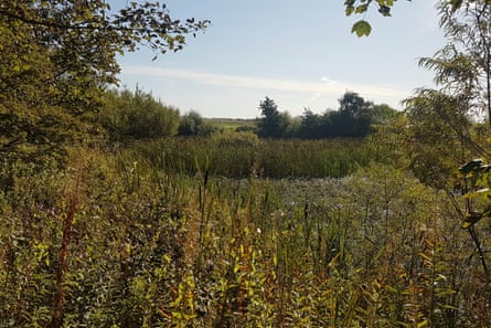 From a wood-chipped clearing, there's a glimpse of the pond
