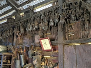 Hunter's skull collection in a Naga hut.