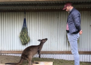Despite never being domesticated, kangaroos appear to be able to communicate with humans in a similar way to dogs.
