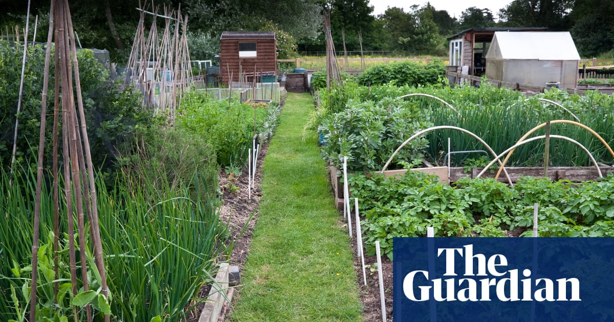 Allotment wars! How community vegetable patches have become a battleground