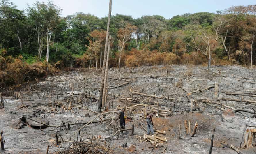 Illegal logging of rainforest in Sierra Leone during 2012.